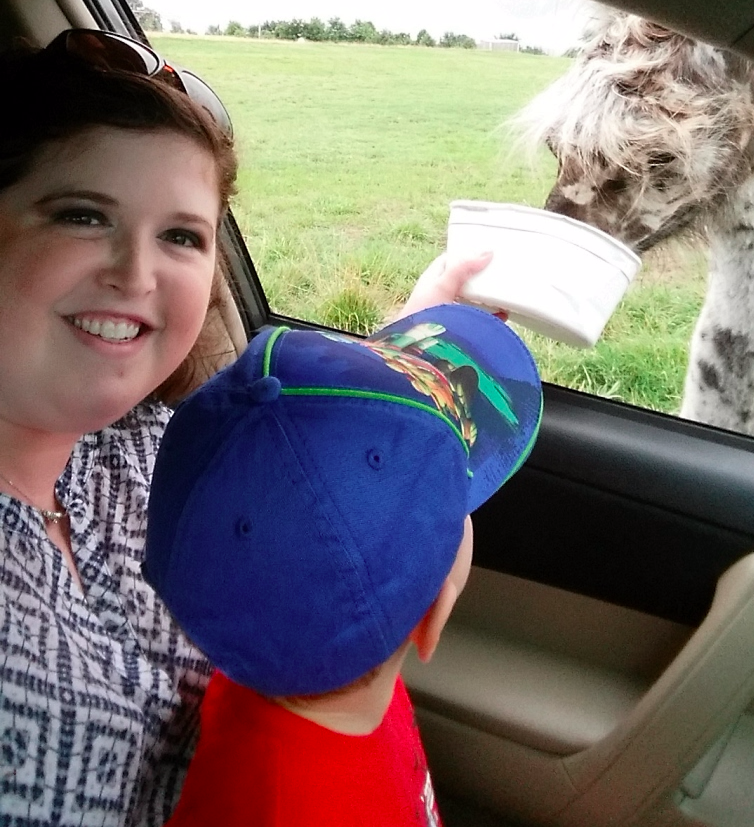 Feeding a Llama at Tennessee Safari Park